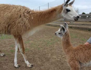 Мелитопольский зоопарк пополнил умилительный малыш