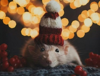 Год Крысы: что нельзя дарить родственникам на Новый год фото
