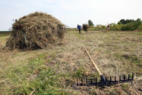 Земля бесценна: украинцам посоветовали не спешить с продажей паев фото