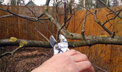 Как защитить сад весной фото