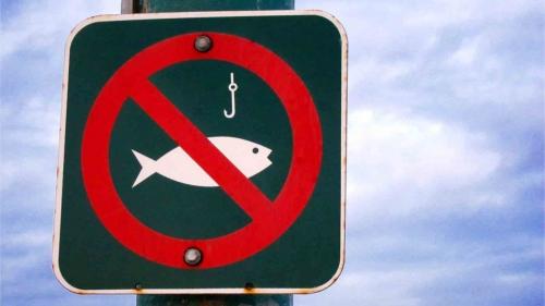 Где на водоемах Запорожской области запрещается рыбачить в течение всего года фото