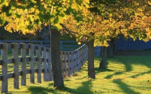 На каком расстоянии от соседей деревья садить можно - разъяснения чиновников фото