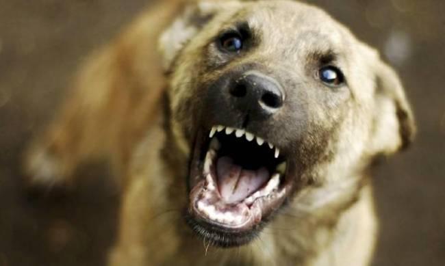 Бездомные собаки нападают на людей  фото