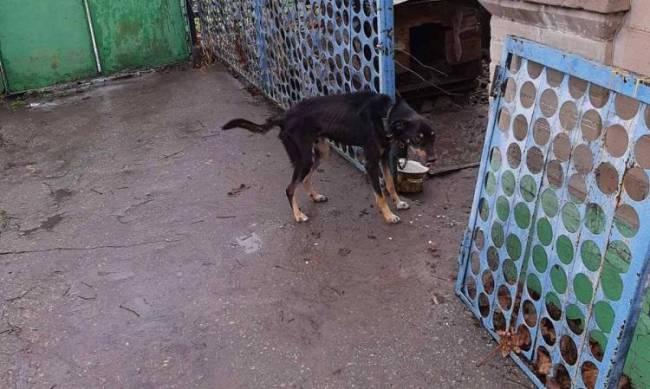 В Мелитополе хозяева морят голодом своих собак  фото