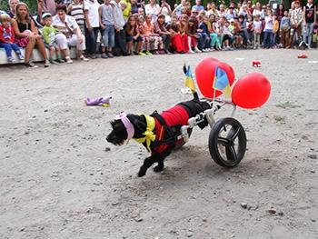 """Фоторепортаж о выставке беспородных собак """"Я теж нівроку"""""""
