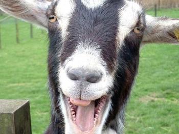 В Мелитополе мужик украл козу и сел на три года