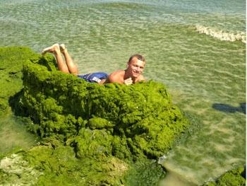 Азовское море снова ужасает посетителей (фото)