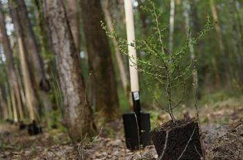 В Мелитопольском районе торжественно посадят деревья