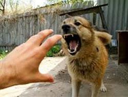 Агрессивное поведение животных